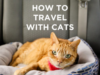 Traveling with Cats - How to Prep Your Cat for Life On the Road // localadventurer.com