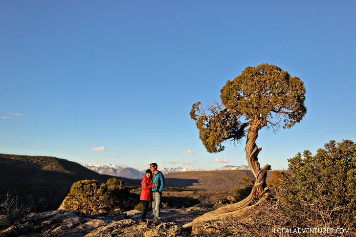 Juniper Trees at Black Canyon of the Gunnison National Park CO // localadventurer.com
