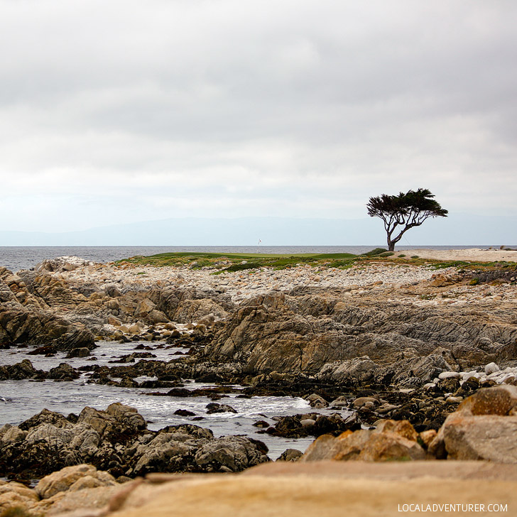 The Beautiful 17 Mile Drive Pebble Beach California // localadventurer.com