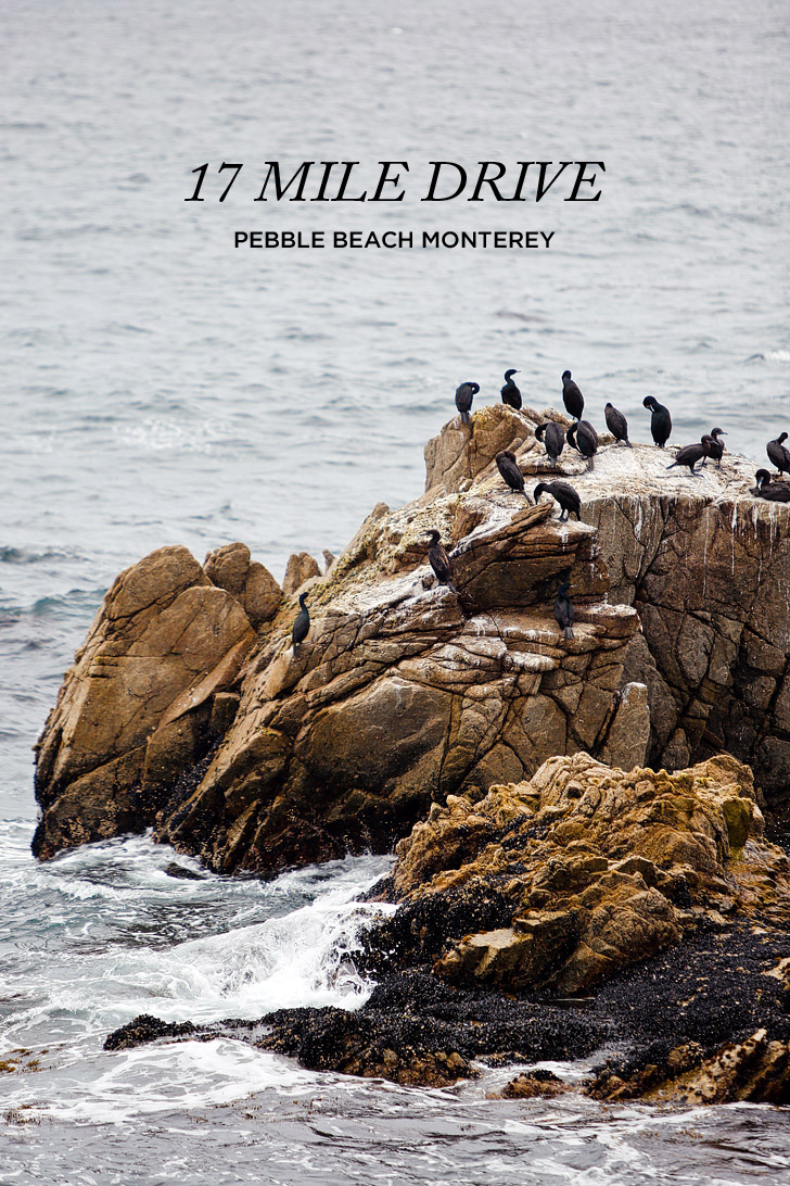 17 Mile Drive Scenic Tour Pebble Beach Monterey County California // localadventurer.com