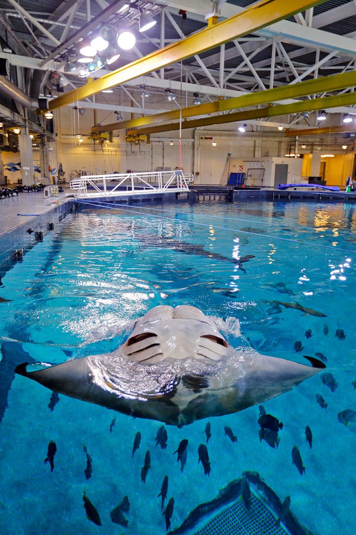 Georgia Aquarium Behind the Scenes // localadventurer.com