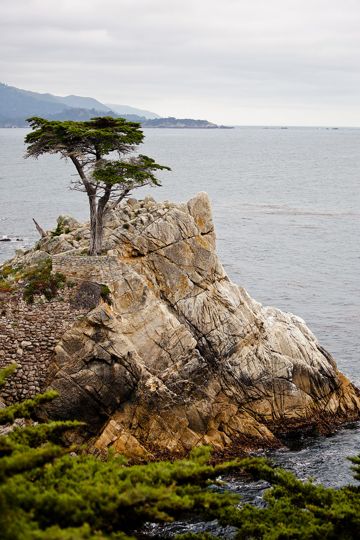 The Lone Cypress Pebble Beach California // localadventurer.com