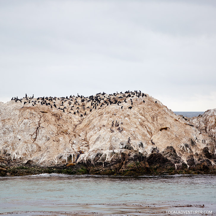 Bird Rock (Photo Guide to the Scenic 17 Mile Drive in Pebble Beach California // localadventurer.com