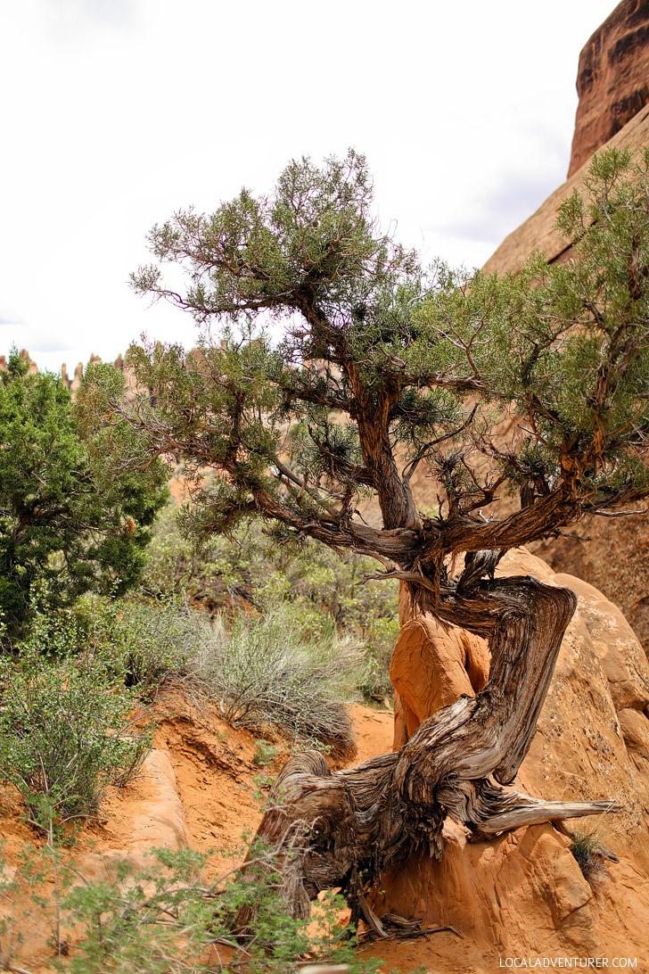 Photo Diary: Devils Garden Trail Moab Utah // localadventurer.com