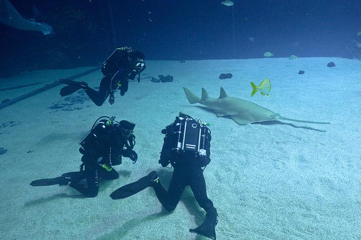 Diving with Whale Sharks at the Georgia Aquarium Atlanta // localadventurer.com