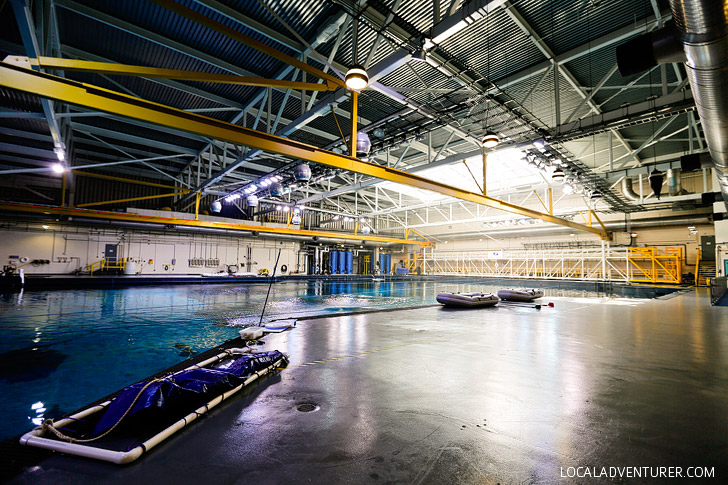 The Georgia Aquarium Behind the Scenes - largest aquarium in the western hemisphere // localadventurer.com