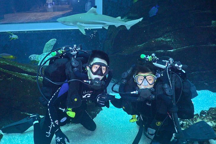 Georgia Aquarium Diving With Whale Sharks Localadventurer