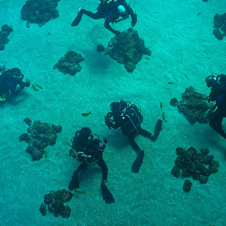 Georgia Aquarium Diving // localadventurer.com