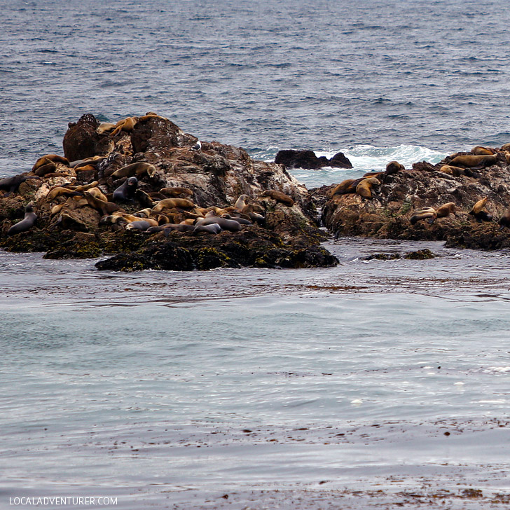 Harbor Seals on Seal Rock (+ Photo Guide to the Scenic 17 Mile Drive Monterey California) // localadventurer.com