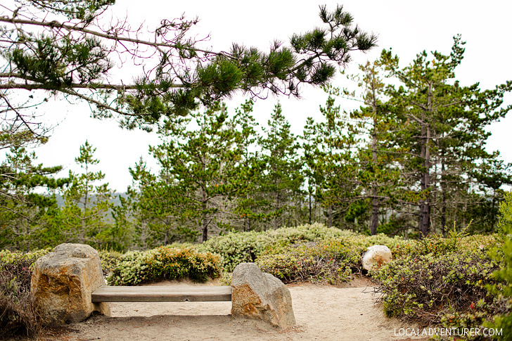 Huckleberry Hill on the Beautiful and Famous 17 Mile Drive, Monterey California // localadventurer.com