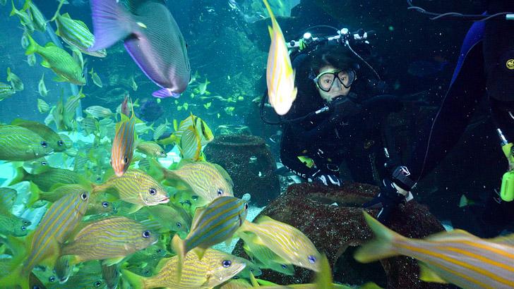 Rebreather Dive in the Georgia Aquarium // localadventurer.com