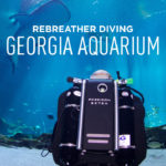 Diving in the Georgia Aquarium with Whale Sharks