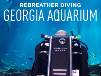 Scuba Diving in the Georgia Aquarium - Journey with Gentle Giants Closed Circuit Rebreather Dive Program // localadventurer.com