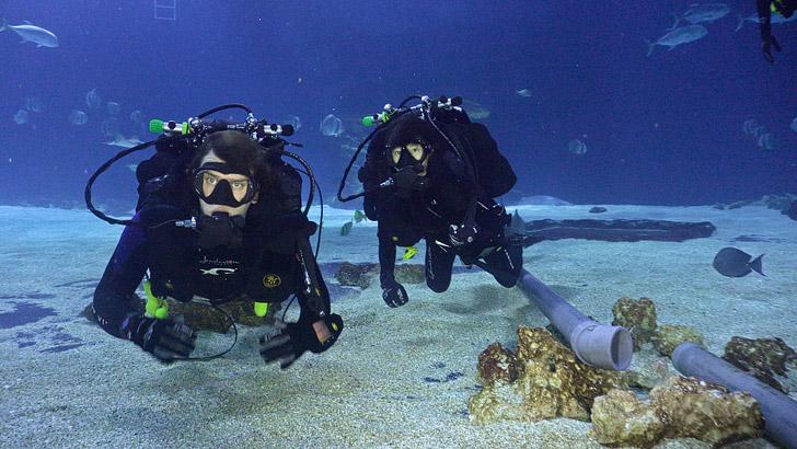 Rebreather Diving Georgia Aquarium // localadventurer.com