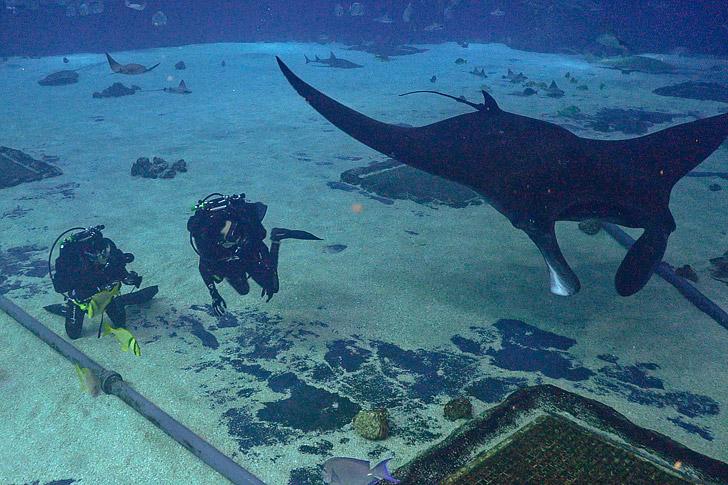 Scuba Diving Georgia Aquarium // localadventurer.com