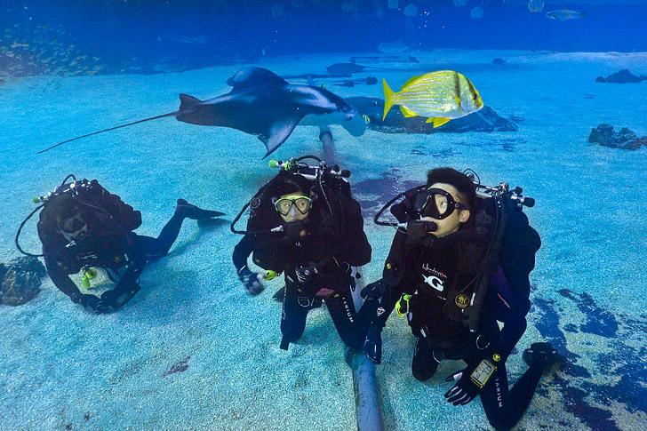 Scuba Diving Georgia Aquarium Atlanta // localadventurer.com
