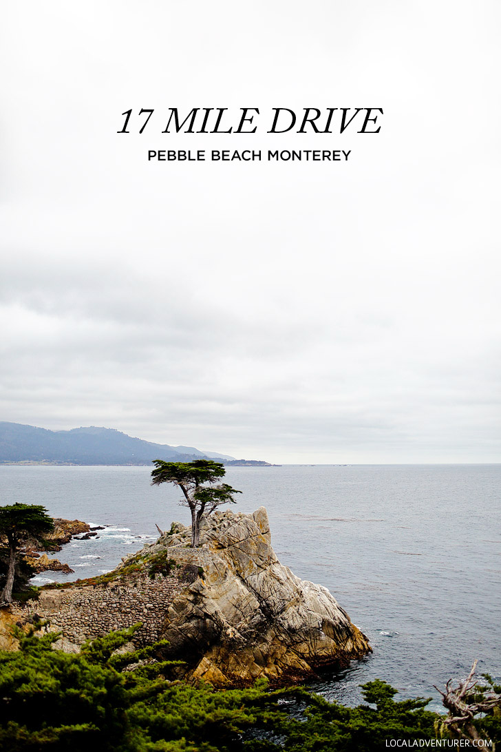 The Lone Cypress on the 17 Mile Drive in Monterey // localadventurer.com