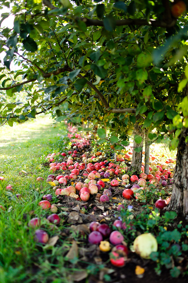 Apple Picking in the Mt Hood Fruit Loop Oregon // localadventurer.com