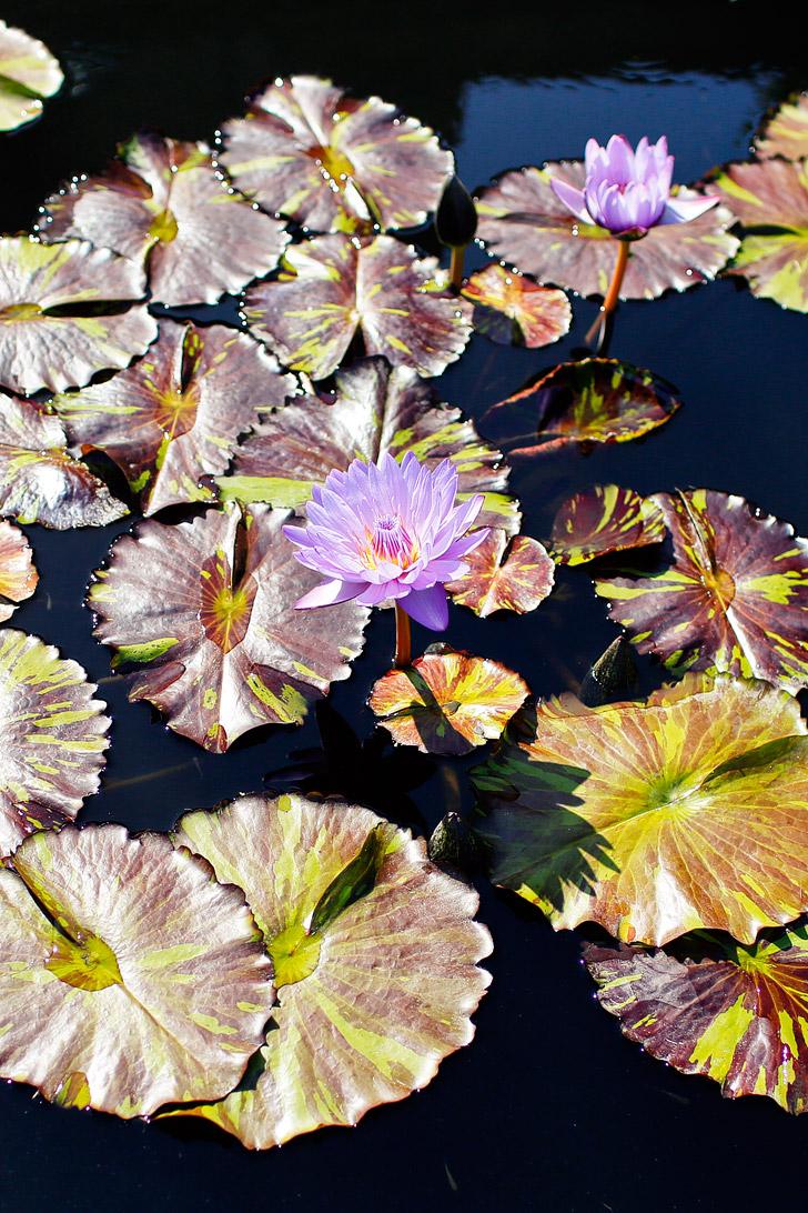 Atlanta Botanical Garden - one // localadventurer.com
