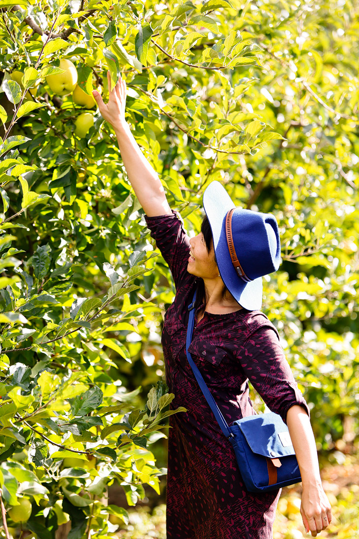 Hood River Apple Picking // localadventurer.com