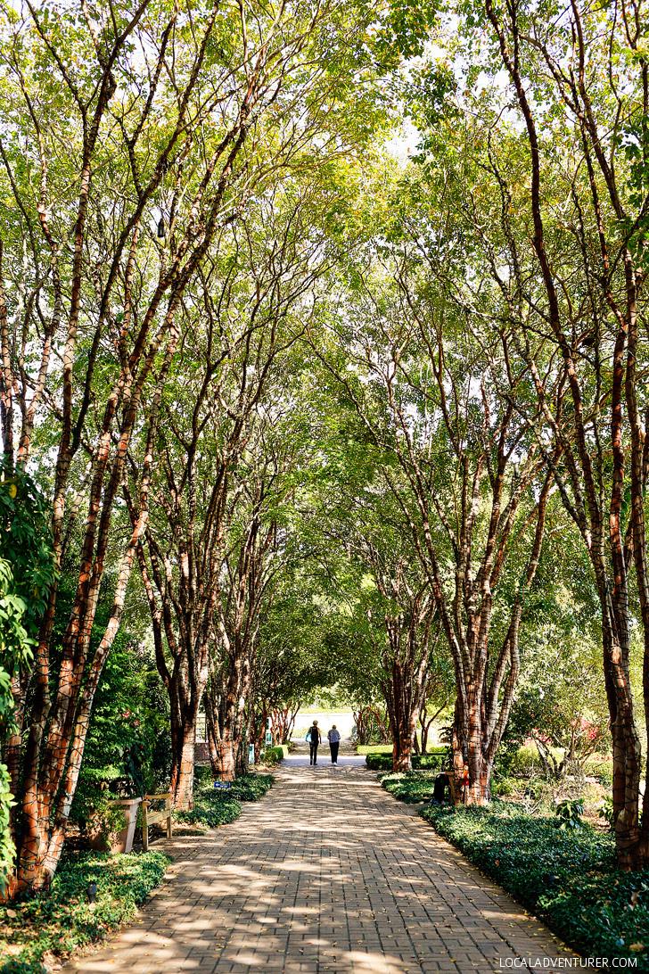 Atlanta Botanical Garden - a 30 acre garden in midtown Atlanta // localadventurer.com