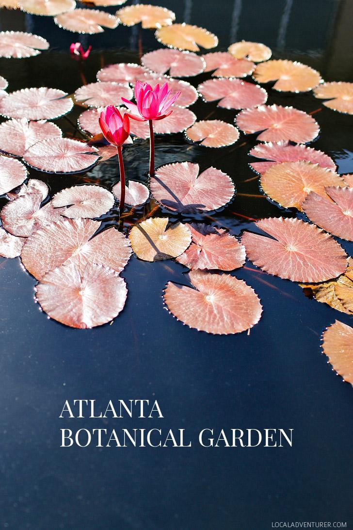 Atlanta Botanical Garden is a 30 acres botanical garden located in Midtown Atlanta, Georgia // localadventurer.com