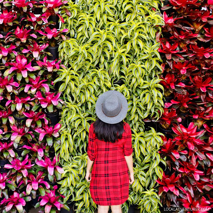Atlanta Botanical Gardens // localadventurer.com