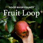 Apple Picking in the Hood River Fruit Loop Oregon