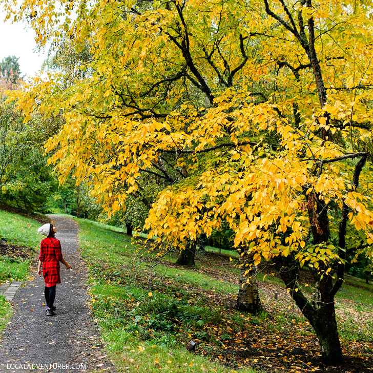 Hoyt Arboretum (25 Free Things to Do in Portland Oregon) - Things to do in Portland with Kids // localadventurer.com