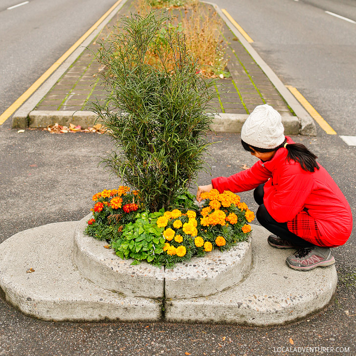 Smallest Park in the World - Mill Ends Park (+ 25 Fun Free Things to Do in Portland Oregon) - Things to Do Portland Today // localadventurer.com