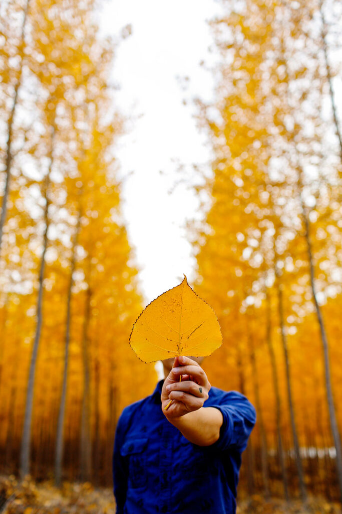 Boardman Tree Farm Fall Foliage Oregon // localadventurer.com