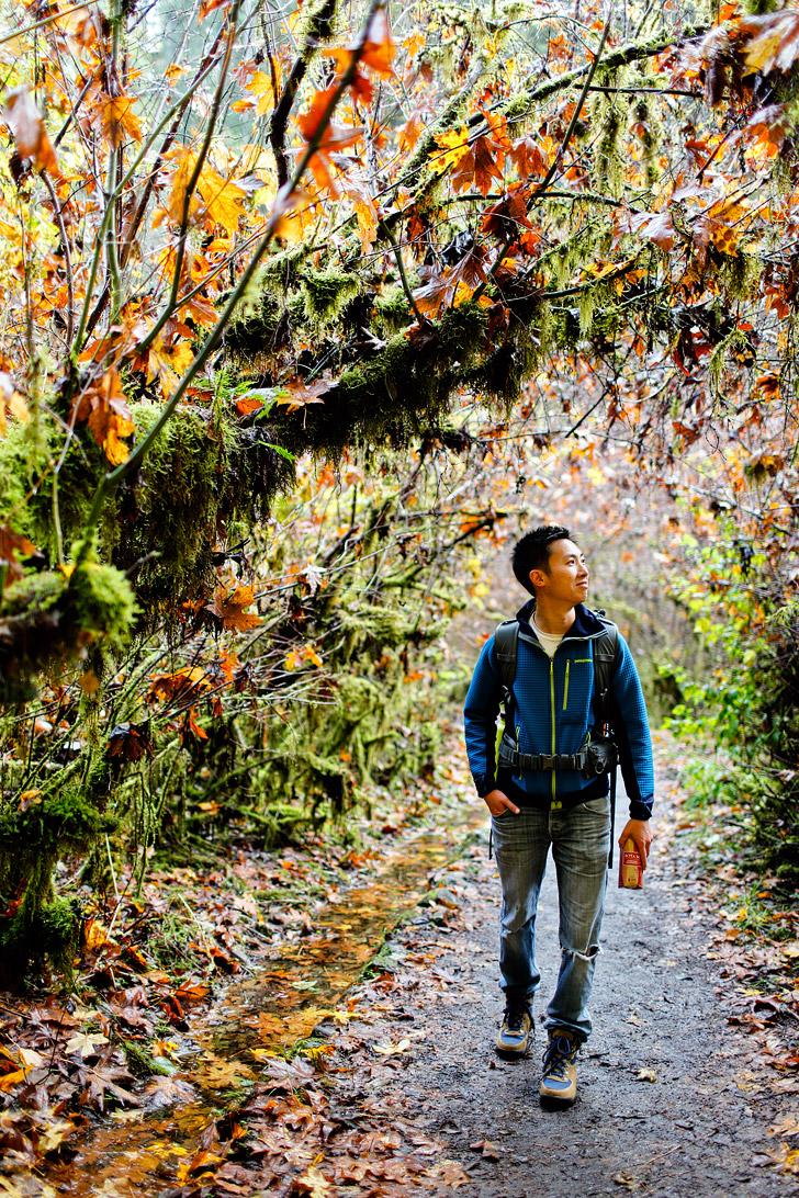 Guide to Silver Falls State Park Hikes // localadventurer.com