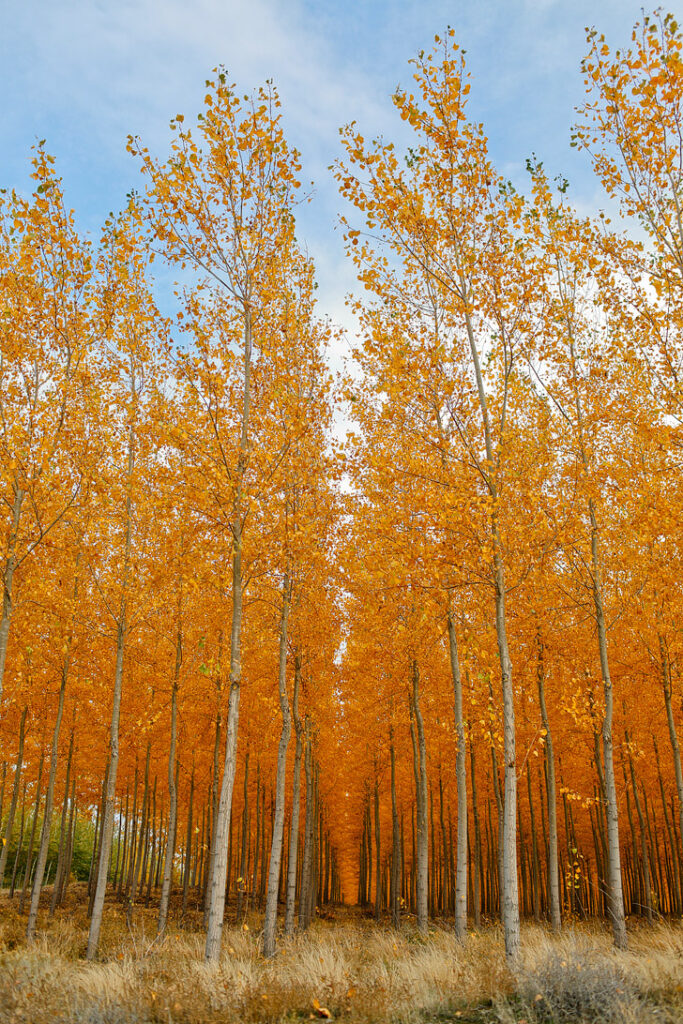 Oregon Fall Foliage at Boardman Tree Farm // localadventurer.com
