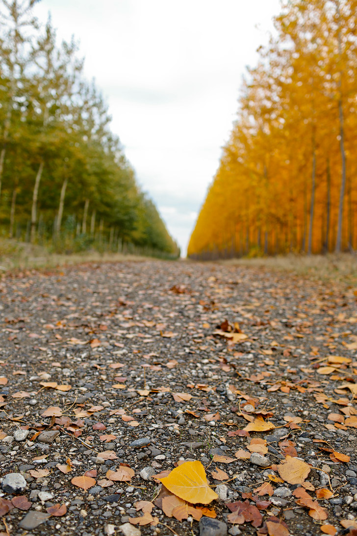 g2_oregon-fall-foliage