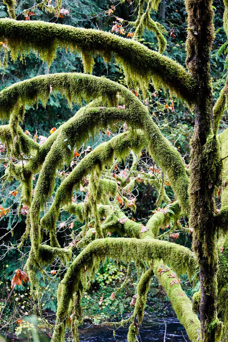 Trail of Ten Falls, Silver Falls State Park , Oregon // localadventurer.com