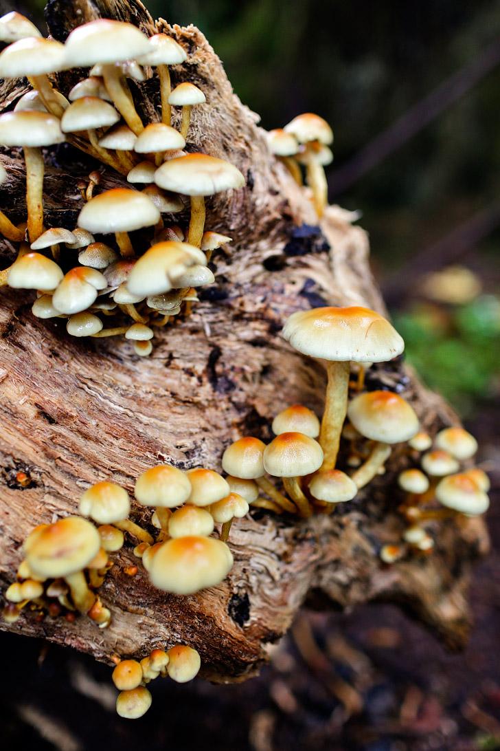 Silver Falls State Park Oregon // localadventurer.com