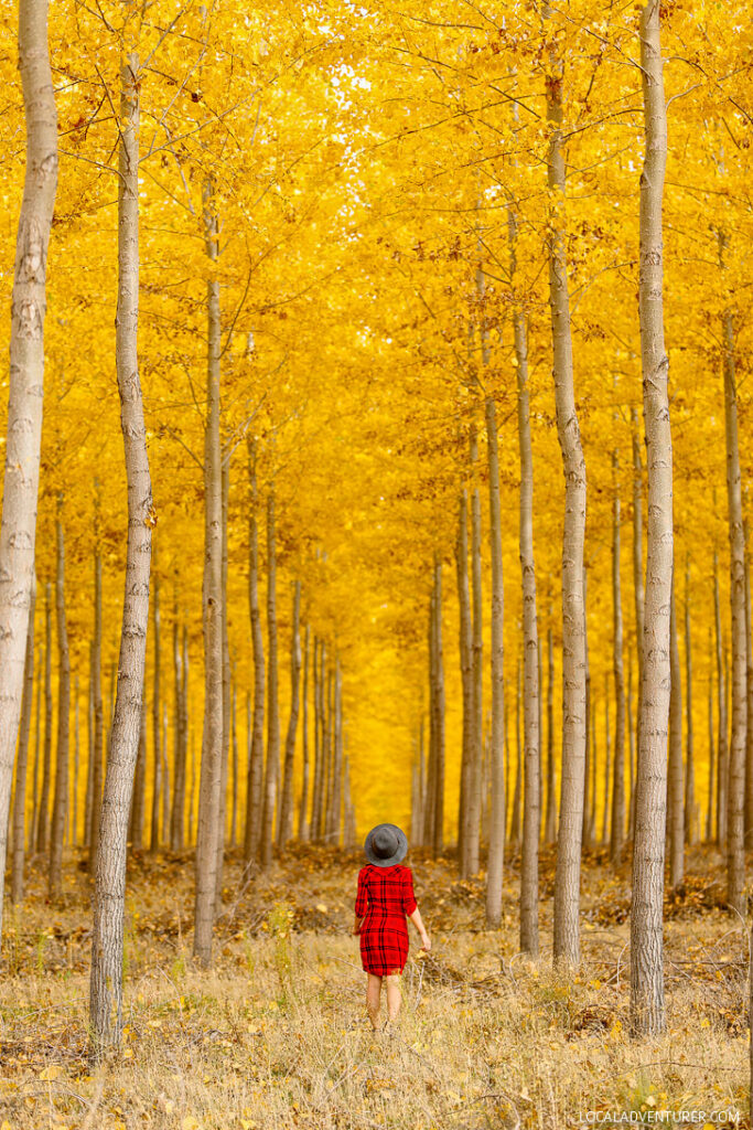 Boardman Tree Farm Oregon in Autumn // localadventurer.com