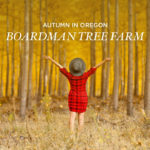 Last Chance to See the Autumn Colors of the Boardman Tree Farm