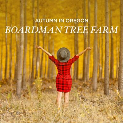 Fall Foliage in Oregon at Boardman Tree Farm // localadventurer.com