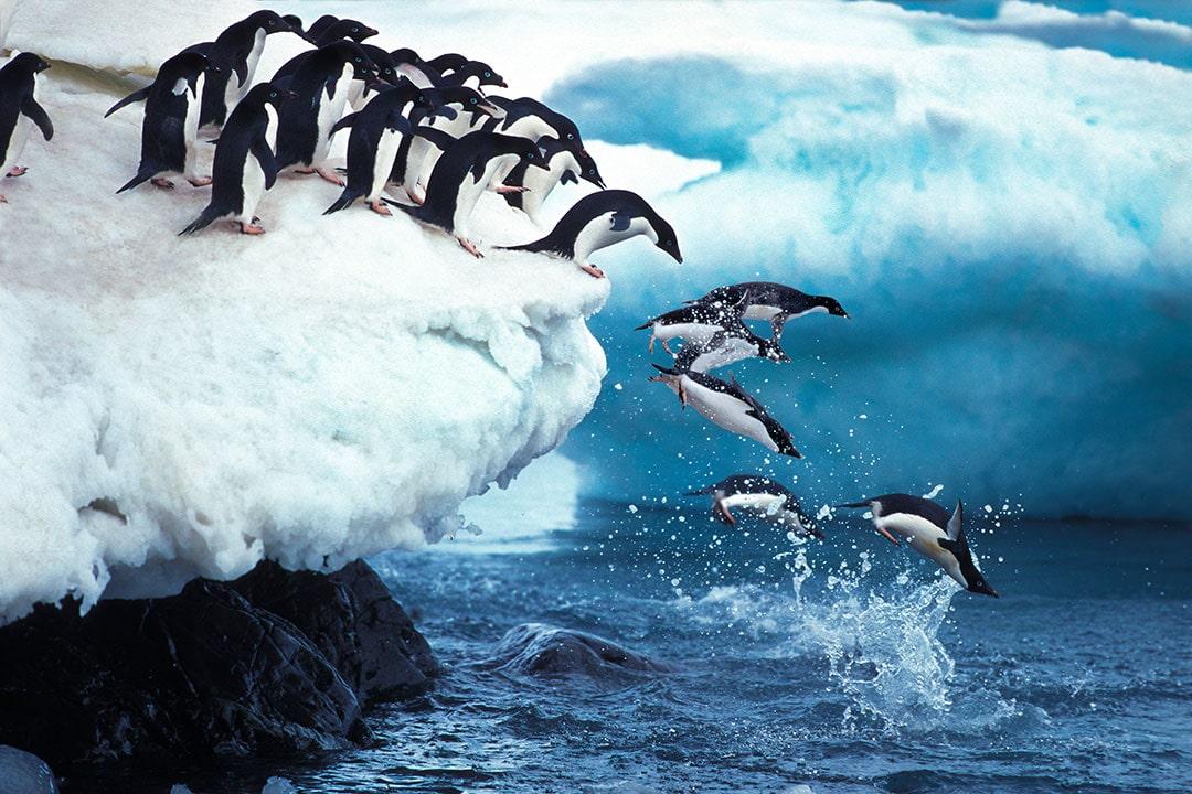 penguins of antarctica - travel wish list