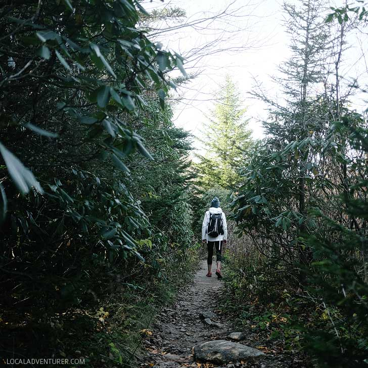 Sam Knob hike near Asheville NC is great for a spectacular view since it sits at an elevation of 6,045 feet and is located on a bald with rocks and shrubs. // localadventurer.com