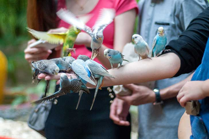 Langkawi Wildlife Park is among the top attractions for families. You can hand feed and pet ostriches, emus, parrots, rabbits, porcupines, raccoons, mouse deer, flamingos, etc. // localadventurer.com