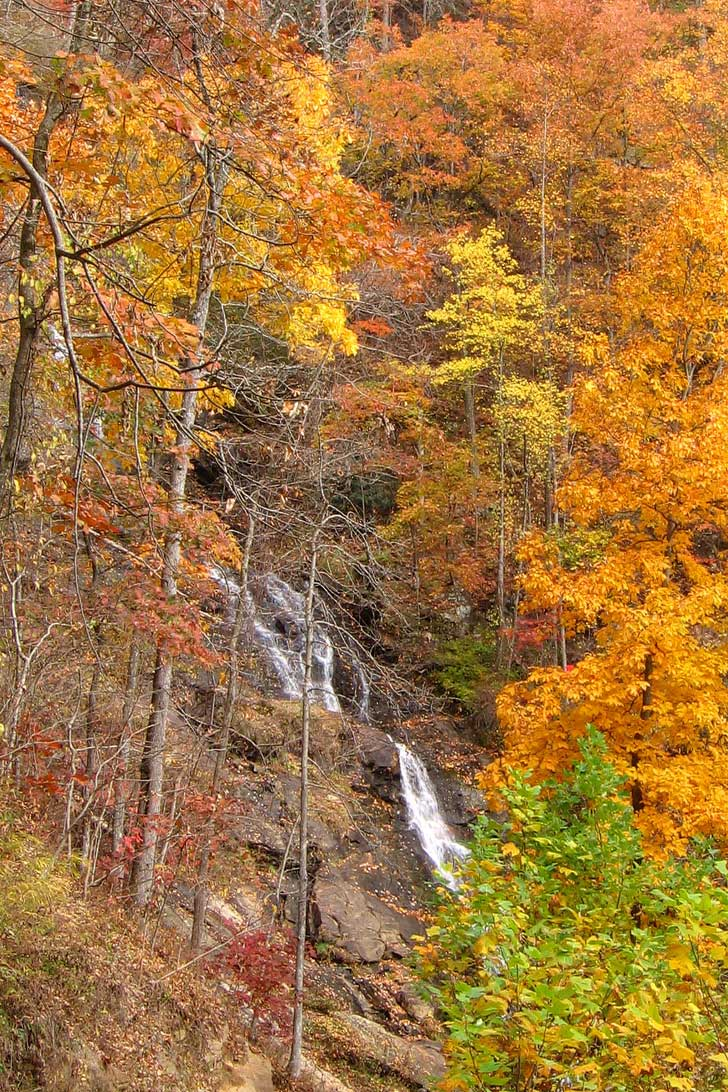 Amicalola Falls State Park has the tallest waterfall in Georgia at 730 ft. There is also a trail leading to the south endpoint of the Appalachian Trail // localadventurer.com