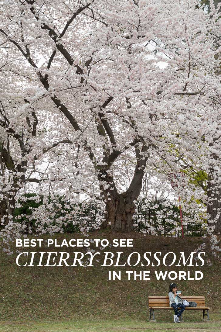 Best Places to See Cherry Blossoms in the World (pc: Robert Pratt) // localadventurer.com