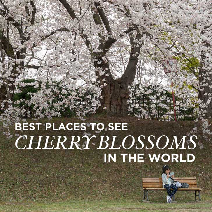 Best Places To Vacation In March In Teh Southern Us: 15 Amazing Places To See Cherry Blossoms In The World