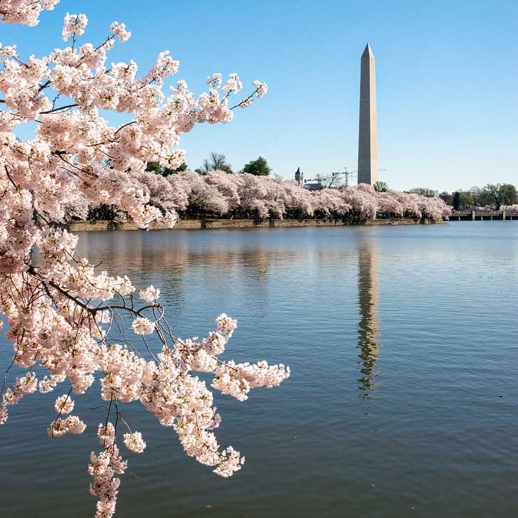 Washington, DC - National Cherry Blossom Festival - THE biggest cherry blossom festival in the country. Find the trees at the Tidal Basin, in East Potomac Park), and Washington Monument (pc: Karen Blaha) // localadventurer.com