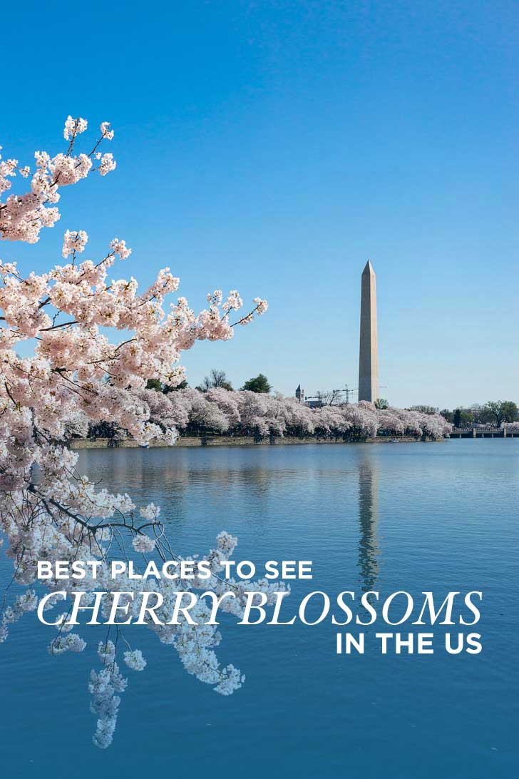 Best Place to See Cherry Blossoms in the US // localadventurer.com