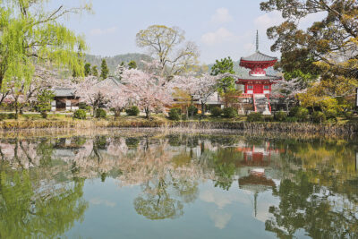 Daikaku-ji Temple in Kyoto Japan + Best Places to See Cherry Blossoms in the World // Local Adventurer #bucketlist
