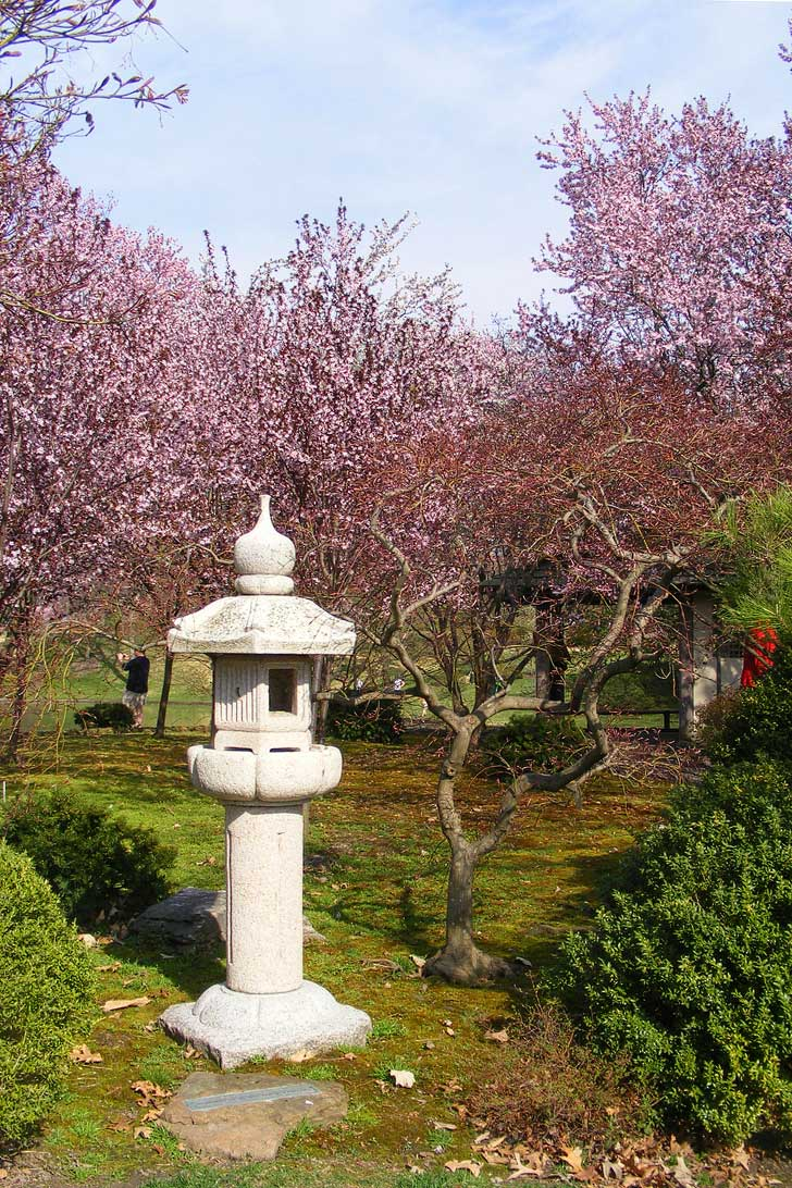 Cherry Blossoms Missouri Botanical Garden in St Louis - weeping 40 Higan cherry trees as well as Yoshino, Twenty Centennial, and Sargent varieties (pc: John W. Schulze) // localadventurer.com