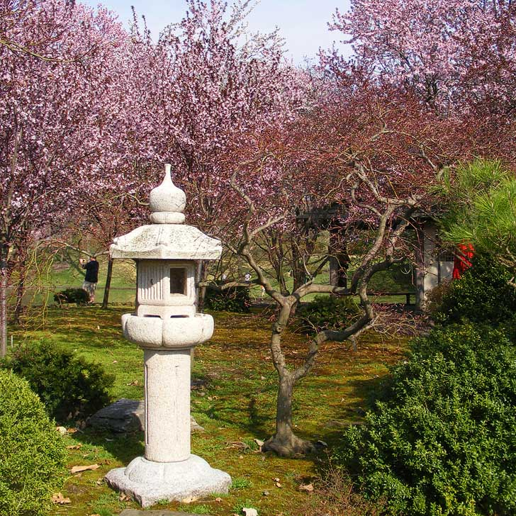 Cherry Blossoms Missouri Botanical Garden in St Louis - weeping 40 Higan cherry trees as well as Yoshino, Twenty Centennial, and Sargent varieties (pc: John W. Schulze) // localadventurer.com
